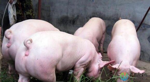 猪卫生圈结构图